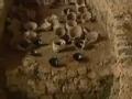 古龙窑盗宝案背后的阴谋