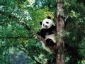 我和熊猫毛毛
