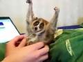 《家庭幽默录像》片花 大眼狐猴卖萌求关爱