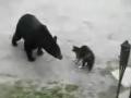 《家庭幽默录像》片花 看家猫赶走小偷熊