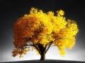 《旅游卫视行者》 非洲十年系列之家有黄金树