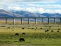 《光阴》20120726 青藏铁路—以人为本