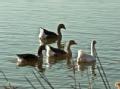 2012行者影像节展映作品——美丽的野鸭湖湿地