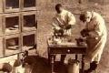 揭秘1910哈尔滨大瘟疫