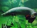 去你的亚马逊之怪鱼迷踪