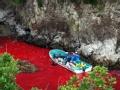 血色海豚湾(上)