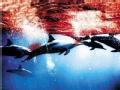 血色海豚湾(下)