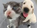 猫狗小可爱1