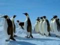 眭澔平禁地解码:我的南极演唱会