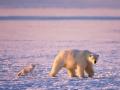 我们替你闯世界 北极圈熊出没