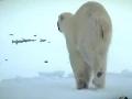 北极在升温