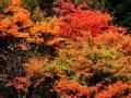 金秋赏红叶 不走寻常路