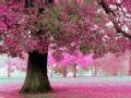 行者映像节入围作品展播 樱花的颜色