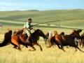 别说你懂内蒙古 草原逐梦
