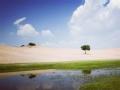 草原 荒漠