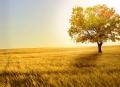 看见东 西 马赛人的朵朵草原