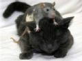 请上车 老鼠爱上猫