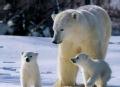 我们替你闯世界 北极圈熊出没(上)