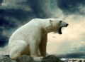 我们替你闯世界 北极圈熊出没(下)