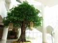 玻璃台村玻璃树