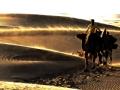 跟我去旅行 翻滚吧沙丘