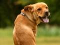 这就是信念的力量 小狗菲斯的故事
