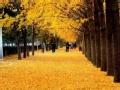 秋北京 老话里的秋天