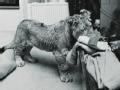 """澳洲兄弟与""""狮子王""""的一世情缘"""