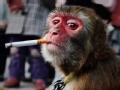 """""""猴三""""戒烟"""