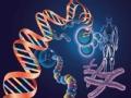 科技刑侦之神秘的DNA