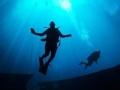 水下致命之旅 出口不在别处