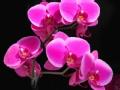 花盆里的春天