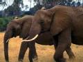 人兽奇缘之大象之母(下)