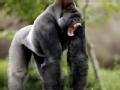 人兽奇缘之家有大猩猩(下)