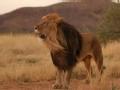 人兽奇缘 养狮日记(上)