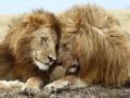 人兽奇缘 养狮日记(下)