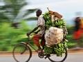 布隆迪疾驰的自行车手(上)