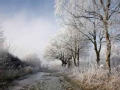 秋北京迎霜降