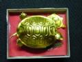中国怪事 天降金龟的背后