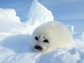 去你的北极圈 英雄本色