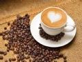 再寻云南咖啡香