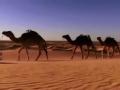 去你的撒哈拉 大漠孤城