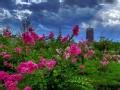 京城赏花 四月芳菲何处寻