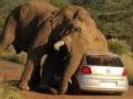 怪事解码 大象的报复