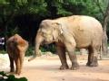 大象之母(下)