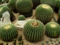 北京植物园的自然奇观
