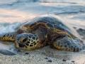 环境特工 海龟营救(上)