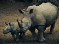 环境特工 犀牛卫士(上)