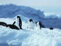 中国南极征程(一)首登南极