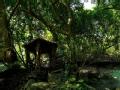 声音猎人 雨林之歌